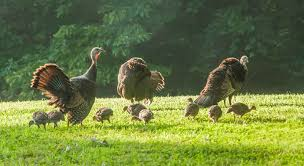 can turkey stand missouri hunters may apply for april 8 9 turkey hunt