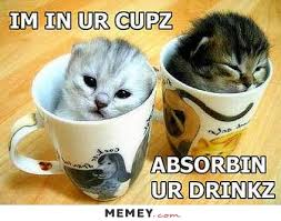 Cute Kitty Memes - cute memes funny cute pictures memey com