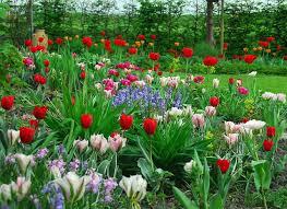 Ideas For Daffodil Varieties Design Best Spring Bulbs For Alaska