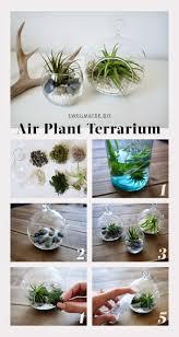 best 20 air plant terrarium ideas on pinterest terrarium diy