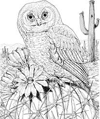 10 difficult owl coloring page for adults