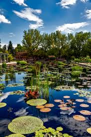 Beautiful Pool Backyards by Free Images Landscape Tree Nature Flower Lake Pond