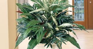 online stores for home decor plant beautiful silk plants and trees in is a one stop shop for