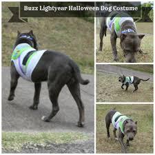 Disney Halloween Costumes Dogs 100 Halloween Dog Costume Ideas Tater Tot Friend