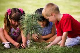 everyone can plant a tree climate change at arborday org