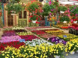 immagini di giardini fioriti balconi e giardini in fiore a piana crixia arriva la giuria