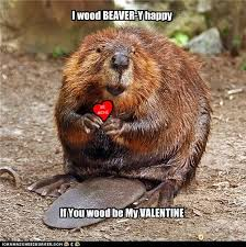 Cute Valentine Memes - beaver valentine from worth a dam martinezbeavers org