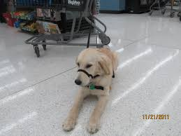 commissary thanksgiving hours avalon growing up as a ksds puppy november 2011