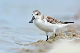 waterbird u0027s paradise u201d shortlisted for world heritage status birdlife