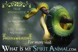 Romanian Love Quotes by Snake Quotes U0026 Sayings Animal Quotes U0026 Sayings