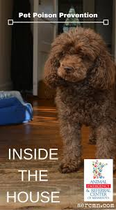49 best pet hazards and toxins images on pinterest pet health