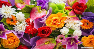 flower delivery nc same day flower delivery nc 704 332 7245