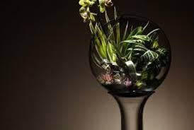 how to plant live moss in a glass bowl home guides sf gate