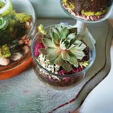 download succulent ideas solidaria garden