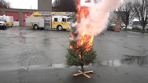 christmas tree burn test dry vs hydrated youtube