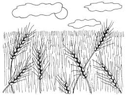 How To Draw Landscapes by How To Draw Wheat Fields How To Draw Wheat Fields Howstuffworks