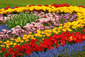 colorful colors 40 colorful garden ideas color explosion