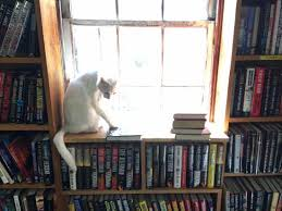 The Book Barn Niantic The Local Goats Picture Of The Book Barn Niantic Tripadvisor