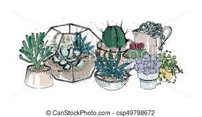 vectors illustration of cactus and succulents composition