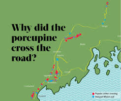 I 95 Map Roadkill Hotspots Why Did The Porcupine Cross The Road Down