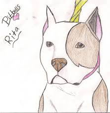 drawn pit bull face pencil and in color drawn pit bull face