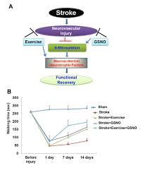 combining exercise and neuroprotective agent shows promise for