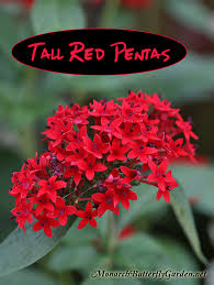 native plants of new mexico butterfly plants list butterfly flowers and host plant ideas