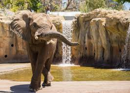 Zoo Increases Sales And Enhances Fresno Zoo Commits To Large Scale Elephant Welfare Project