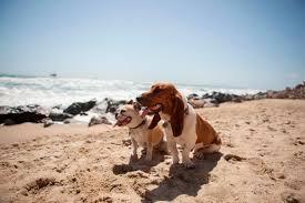 belgian sheepdog dogtime preventing heat stroke in dogs dogtime
