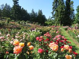 portland the city of roses u2013 knowledge world network