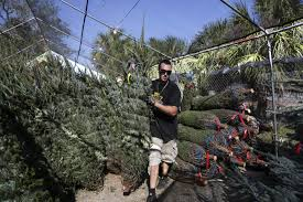 nationwide tree shortage has experts warning buy early