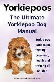 hair accessories for yorkie poos cute and intelligent yorkiepoo puppies