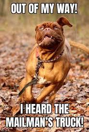 Funny Meme Dog - 17 unforgettable funny dog memes unleashed barking laughs