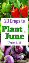 25 best zone 9 gardening ideas on pinterest purple plants