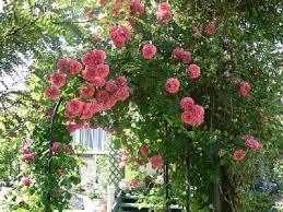 immagini di giardini fioriti piante da giardino fiorite come scegliere quelle giuste foto