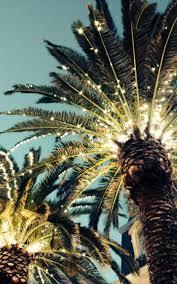 palm tree christmas tree lights key west christmas trees i m going to key west next week i can