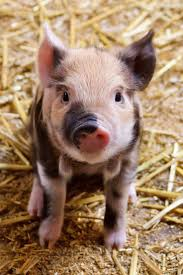 549 best pigs images on pinterest drawings cute things and party
