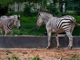 Ottoman Zoo Zoo
