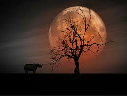 Amazing Pictures Of Nature by Amazing Nature Landscapes Moon Over Me Eyesofodysseus