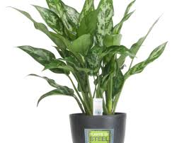 indoor palm likableart miniature indoor plants curious plastic planters