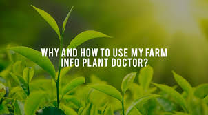 Plant Disease Diagnosis - crop disease diagnosis myfarminfo blog