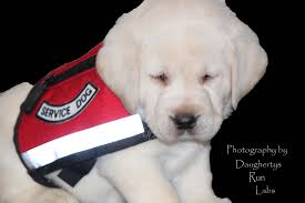 puppies for sale pa index