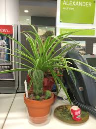 plant on desk everyone with a desk job should have plants huffpost
