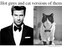 Hot Guy Meme - hot guys and cat versions of them meme collection
