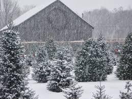 tower family christmas tree farm it u0027s beginning to look alot like