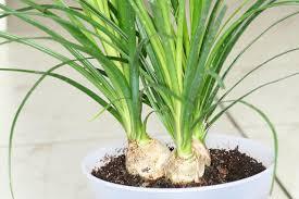 Plant For Desk Best Houseplants For Sunny Windows