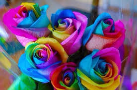 roses wholesale best price for hybrid seeds factory rainbow roses wholesale