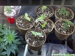 how many lumens or watts do i need growing medical marijuana