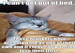 Get Out Of Bed Meme - i can t seem to get out of bed these blankets have accepted me as