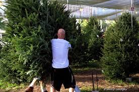 hart t tree farms christmas tree lot fort lauderdale florida